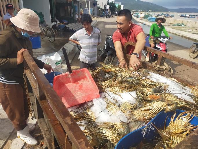 Quặn lòng trước cảnh tôm hùm chết hàng loạt ở Phú Yên - Ảnh 5.