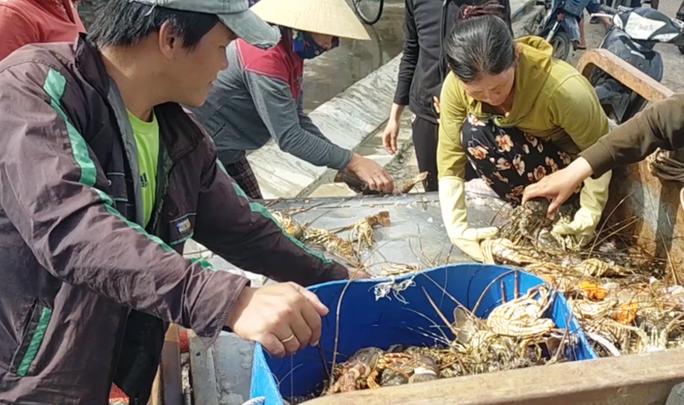 Quặn lòng trước cảnh tôm hùm chết hàng loạt ở Phú Yên - Ảnh 6.