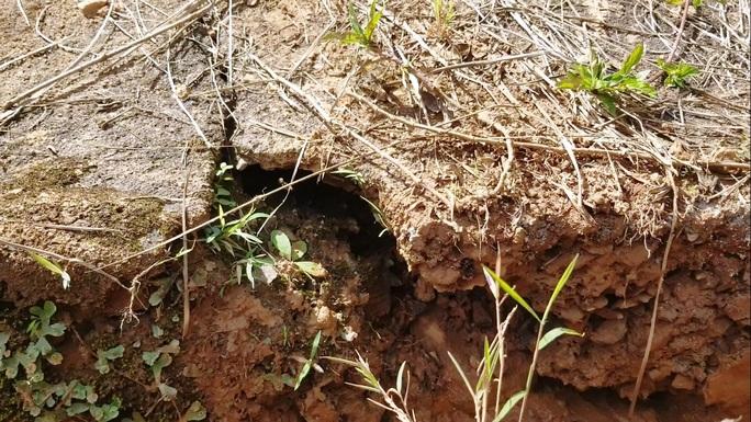 Cận cảnh sụt lún bất thường đe dọa hồ Tuyền Lâm - Ảnh 3.