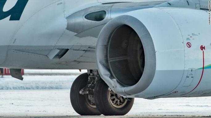 Chuyến bay của Alaska Airlines va chết con gấu trên đường băng khi hạ cánh - Ảnh 1.