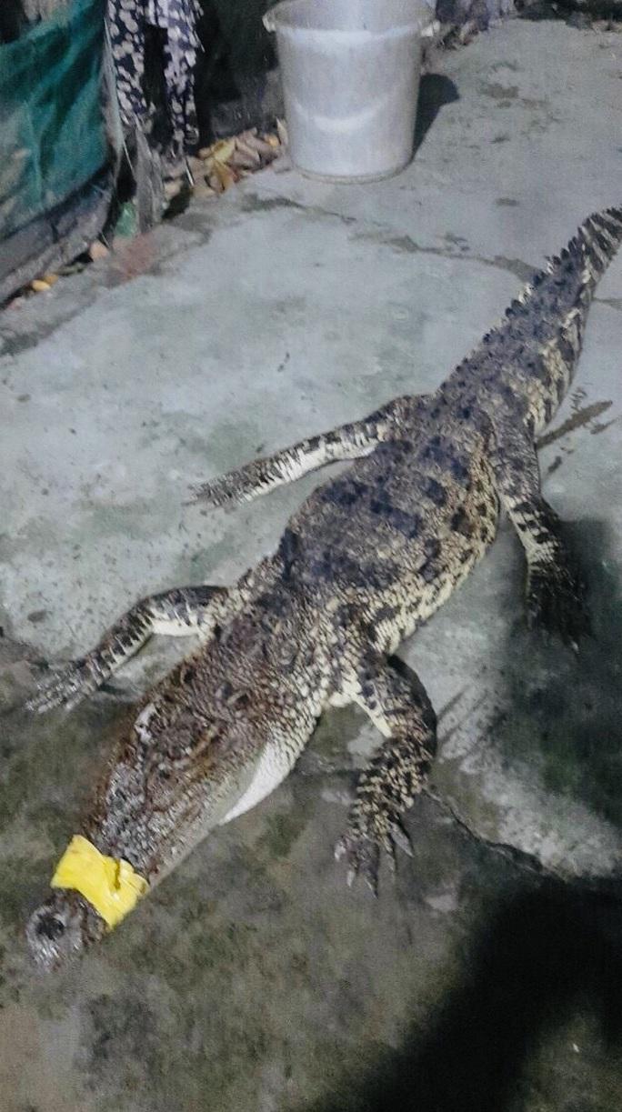 """Người dân miền Tây lại vây bắt cá sấu """"đi lạc""""  - Ảnh 1."""