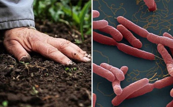 Chuyên gia lý giải bệnh Whitmore tăng đột biến sau mưa lũ - Ảnh 3.