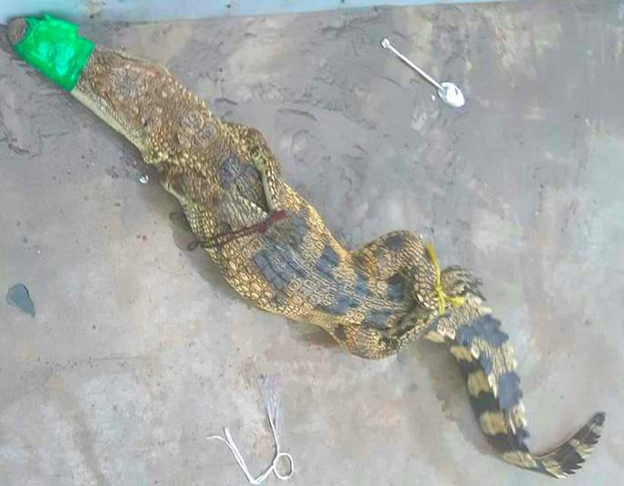 Hiểm họa cá sấu sổng chuồng - Ảnh 4.