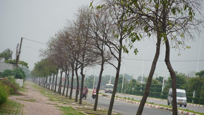 Hàng trăm cây xanh ở Vũng Tàu trụi lá vì sâu lạ tấn công - Ảnh 3.