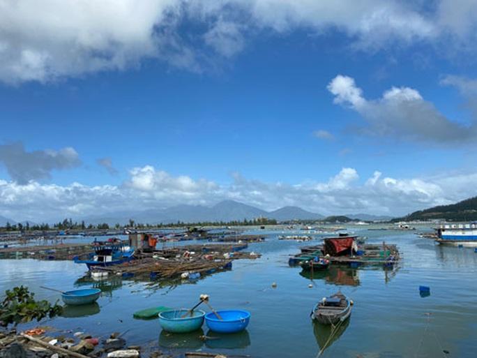 Đà Nẵng: Khó giải tỏa lồng bè nuôi cá trái phép - Ảnh 1.
