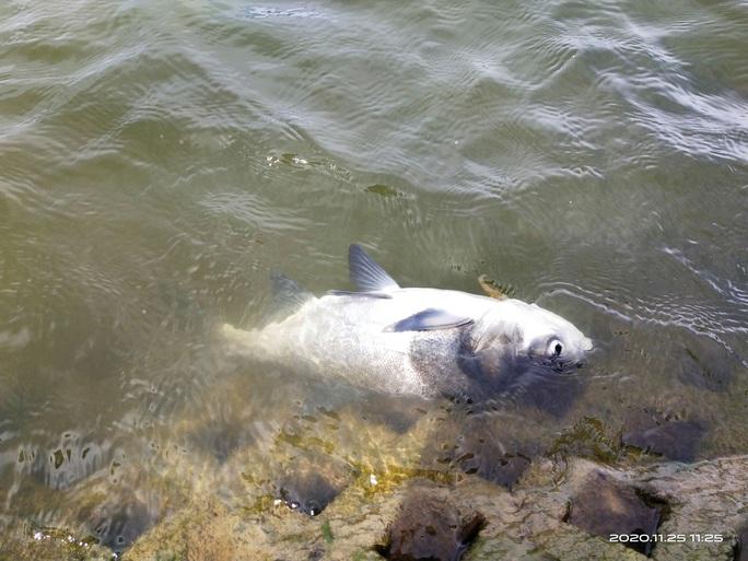 Đà Lạt: Cá lớn chết bất thường ở hồ Xuân Hương  - Ảnh 2.