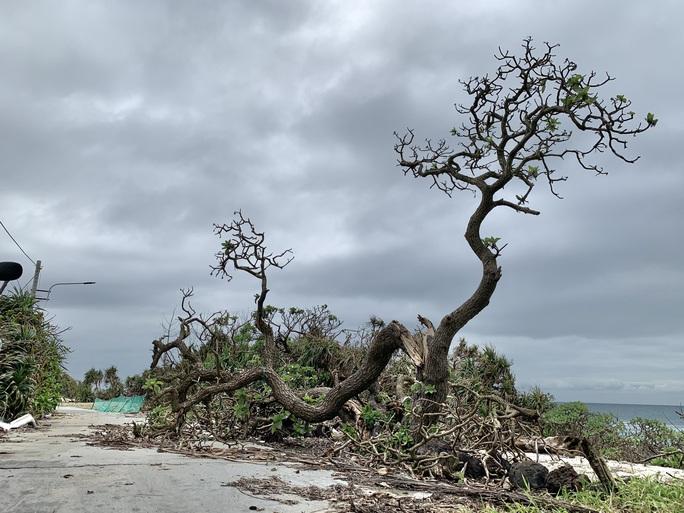 Hàng chục ngàn cây xanh trên đảo Lý Sơn bị bão vặt trụi lá  - Ảnh 13.