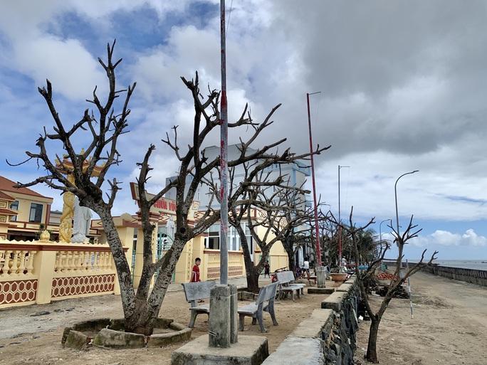 Hàng chục ngàn cây xanh trên đảo Lý Sơn bị bão vặt trụi lá  - Ảnh 11.
