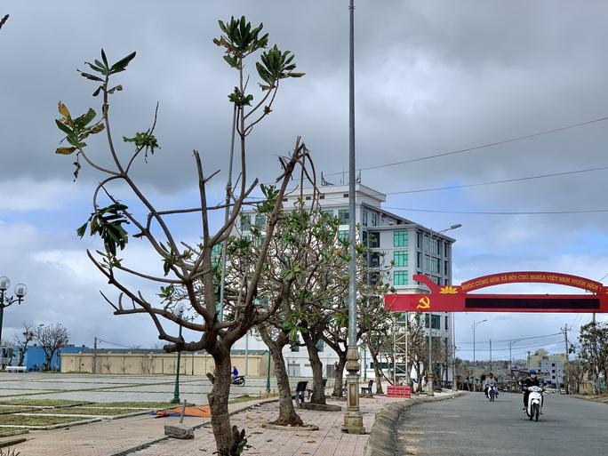 Hàng chục ngàn cây xanh trên đảo Lý Sơn bị bão vặt trụi lá  - Ảnh 8.