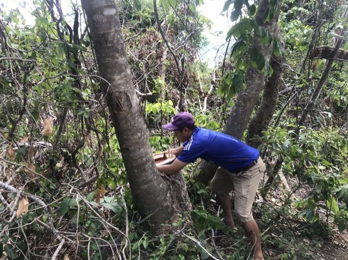Còn phá rừng, còn thảm họa thiên tai: Phá hàng chục ha rừng trong vài tháng - Ảnh 2.