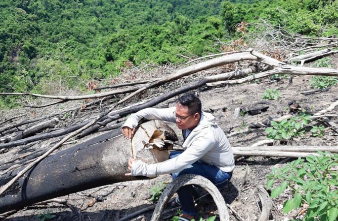 Còn phá rừng, còn thảm họa thiên tai: Phá hàng chục ha rừng trong vài tháng - Ảnh 3.