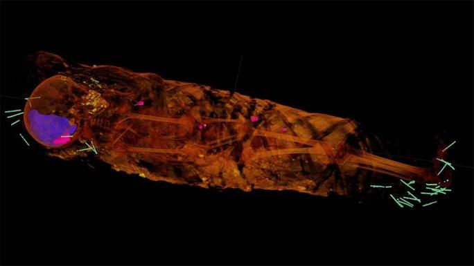 Máy CT tiết lộ bất ngờ về thiếu nữ bọc thạch cao trong hầm mộ - Ảnh 2.