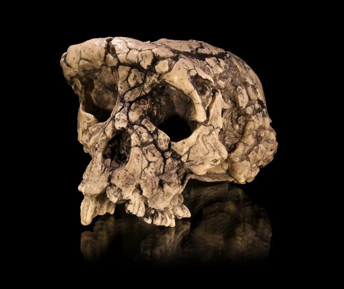 Sự thật sốc khi khám nghiệm hài cốt con người đầu tiên trên Trái Đất - Ảnh 1.