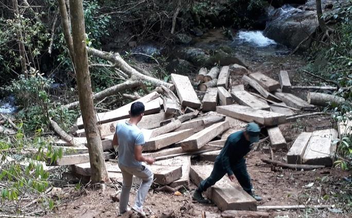 phá rừng Kontum