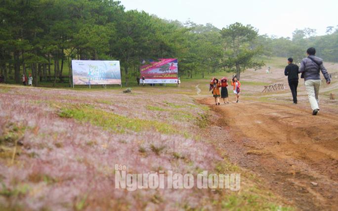 Không tổ chức mùa hội cỏ hồng Langbiang Đà Lạt 2020 - Ảnh 2.
