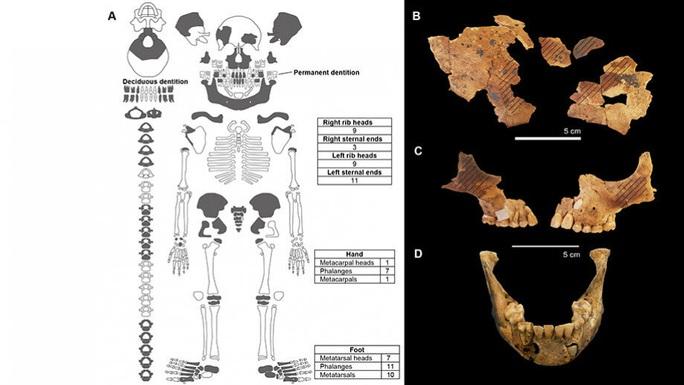 Bí ẩn mộ cổ 8.000 tuổi của người tí hon không tay - Ảnh 2.