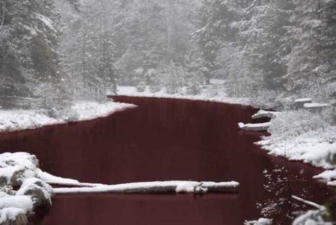 Rùng mình cảnh sông ở Nga đỏ dị thường, động vật không dám xuống - Ảnh 3.