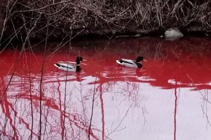 Rùng mình cảnh sông ở Nga đỏ dị thường, động vật không dám xuống - Ảnh 4.