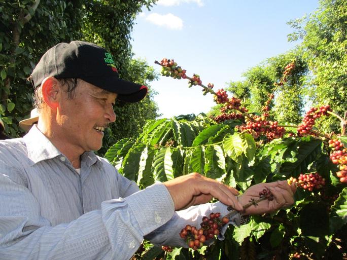 Nâng tầm cà phê Việt - Ảnh 1.