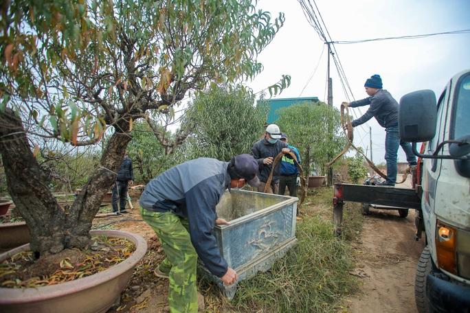 CLIP: Cận cảnh người dân làng đào Nhật Tân nhộn nhịp tuốt lá đào chuẩn bị dịp tết - Ảnh 9.
