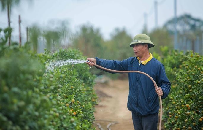 CLIP: Cận cảnh người dân làng đào Nhật Tân nhộn nhịp tuốt lá đào chuẩn bị dịp tết - Ảnh 11.