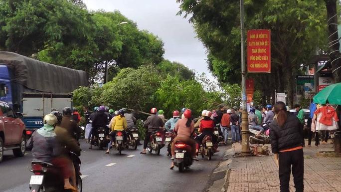 Cây xanh bật gốc đổ ra đường, đè xe máy và ôtô - Ảnh 1.