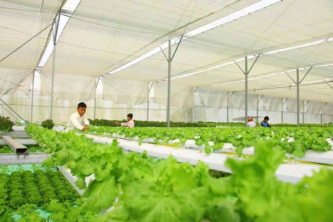 Đưa nông sản ĐBSCL vào chuỗi giá trị toàn cầu - Ảnh 1.