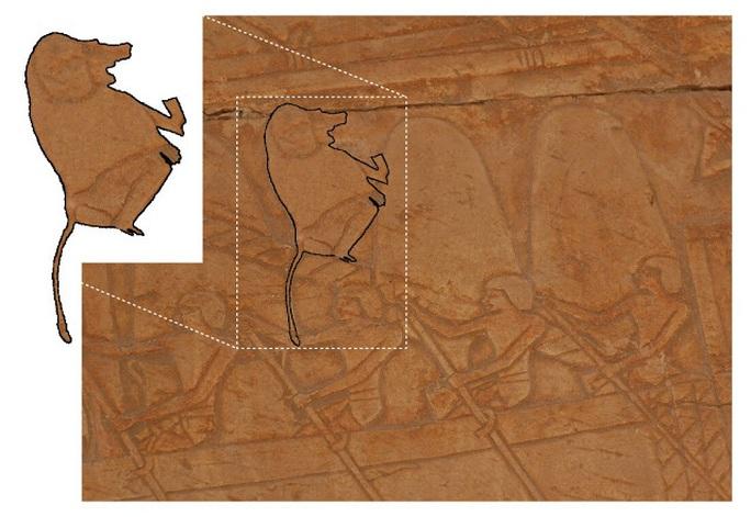 Xác ướp không phải con người tiết lộ đất châu báu đầy vàng 3.000 năm - Ảnh 2.