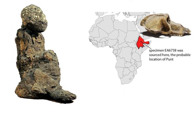 Xác ướp không phải con người tiết lộ đất châu báu đầy vàng 3.000 năm - Ảnh 1.