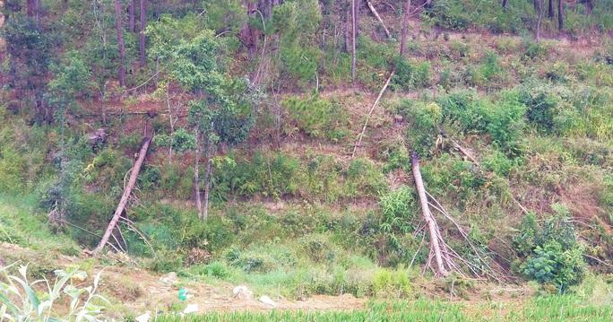 Hàng chục căn nhà trái phép mọc lên sát núi Voi ở Lâm Đồng - Ảnh 10.
