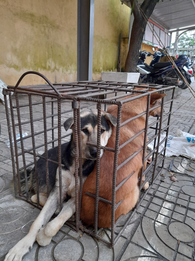 Truy bắt kẻ trộm chó, bắt được... kẻ trộm mèo - Ảnh 1.
