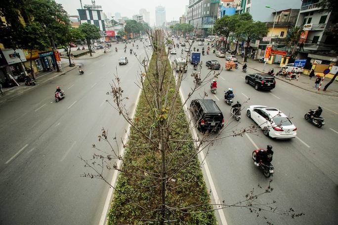 """CLIP: Cận cảnh hàng cây phong lá đỏ chết khô trên con đường """"đẹp nhất Việt Nam"""" - Ảnh 2."""