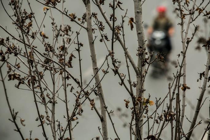 """CLIP: Cận cảnh hàng cây phong lá đỏ chết khô trên con đường """"đẹp nhất Việt Nam"""" - Ảnh 4."""