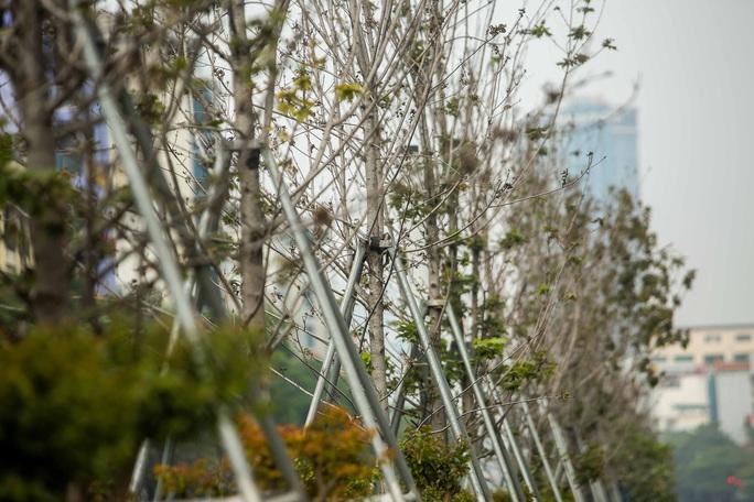 """CLIP: Cận cảnh hàng cây phong lá đỏ chết khô trên con đường """"đẹp nhất Việt Nam"""" - Ảnh 7."""