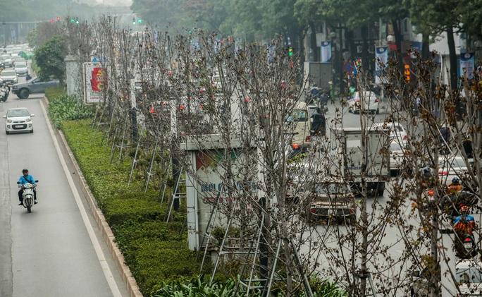 """CLIP: Cận cảnh hàng cây phong lá đỏ chết khô trên con đường """"đẹp nhất Việt Nam"""" - Ảnh 11."""