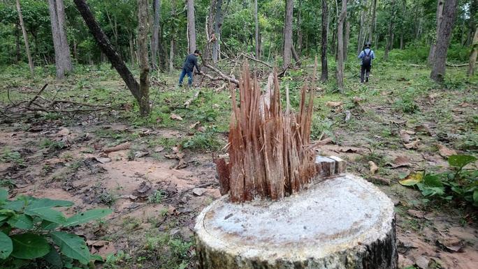 Giữ rừng bằng công nghệ ảnh viễn thám - Ảnh 1.