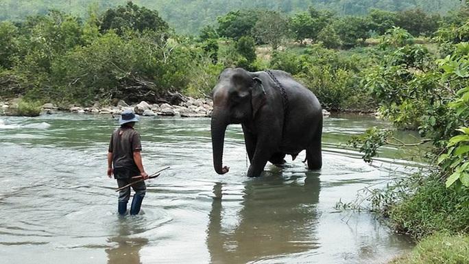 Con voi cuối cùng ở Bắc Tây Nguyên đã chết - Ảnh 2.