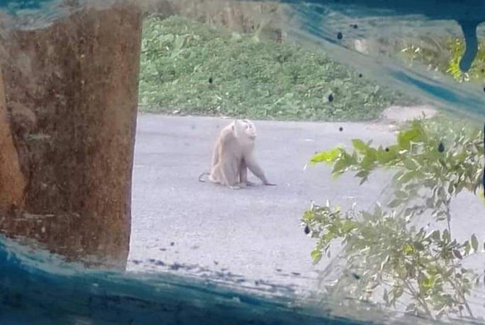 Khỉ đực nặng 10kg sống lang thang, cắn nhiều người ở khu dân cư - Ảnh 1.