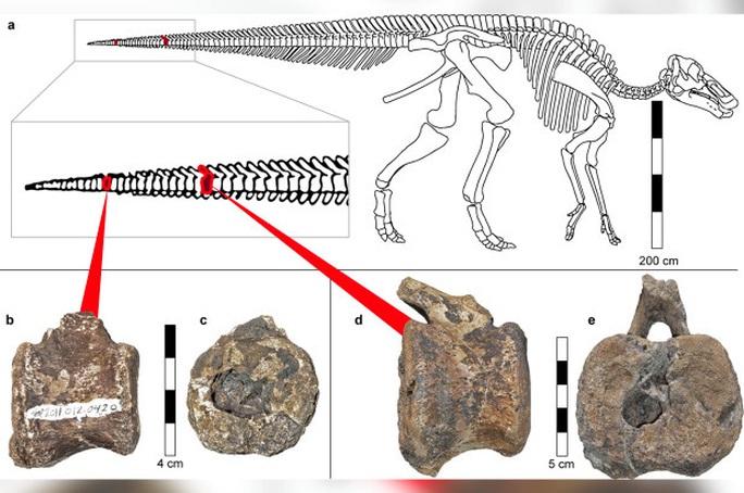 Sốc: khủng long 66 triệu tuổi sở hữu thứ tưởng chỉ có ở con người - Ảnh 1.