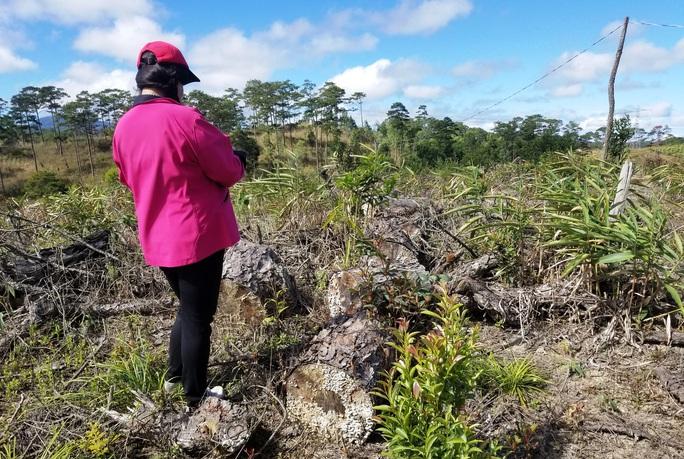 Kinh hoàng rừng thông bị tàn phá và rao bán cả đất rừng như vô chủ - Ảnh 11.