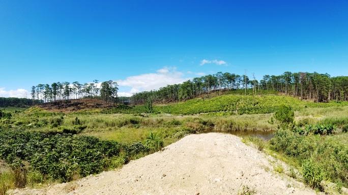 Kinh hoàng rừng thông bị tàn phá và rao bán cả đất rừng như vô chủ - Ảnh 13.