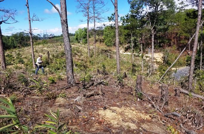 Kinh hoàng rừng thông bị tàn phá và rao bán cả đất rừng như vô chủ - Ảnh 7.