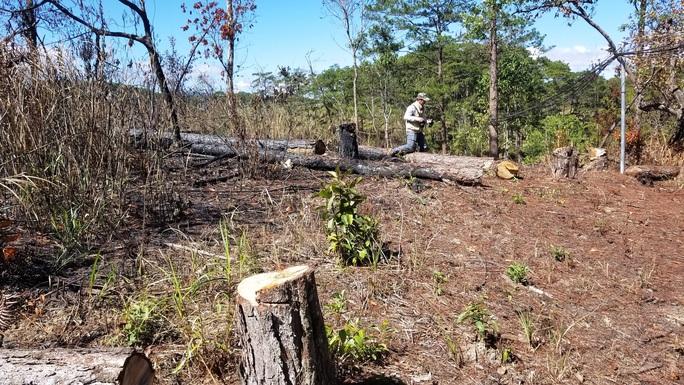 Kinh hoàng rừng thông bị tàn phá và rao bán cả đất rừng như vô chủ - Ảnh 6.