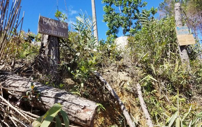 Kinh hoàng rừng thông bị tàn phá và rao bán cả đất rừng như vô chủ - Ảnh 12.