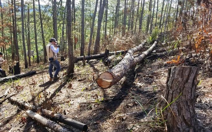Kinh hoàng rừng thông bị tàn phá và rao bán cả đất rừng như vô chủ - Ảnh 1.