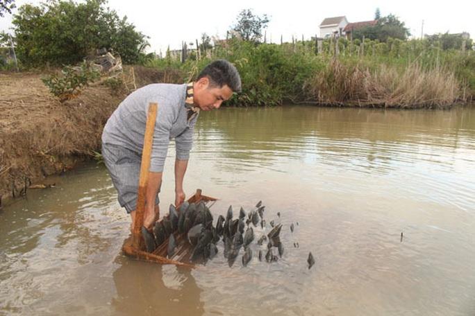 Kho ngọc chục tỉ nằm dưới ao ở huyện M'Đrắk, tỉnh Đắk Lắk - Ảnh 1.