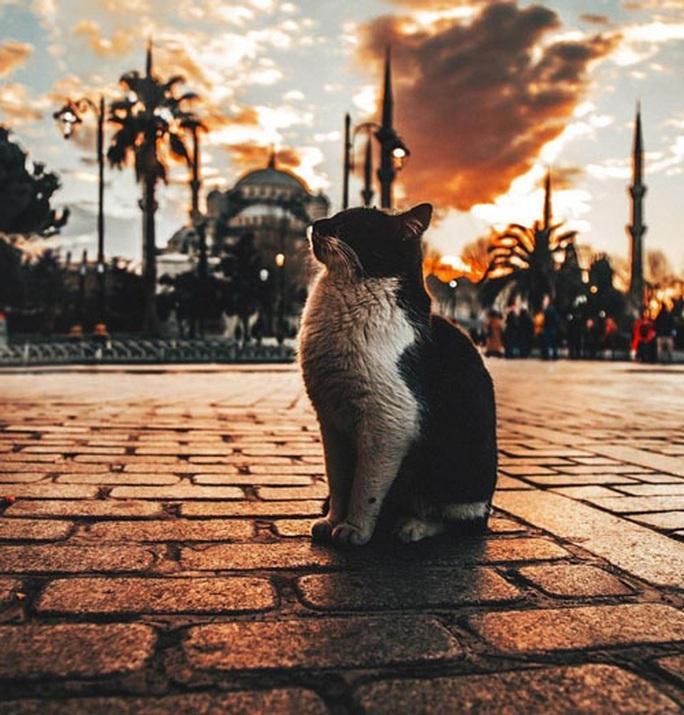 Đến thành phố của mèo, nở nụ cười vui vẻ - Ảnh 3.