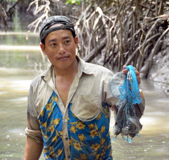 CLIP: Săn bắt loài cá biết leo cây đang dần cạn kiệt ở Cà Mau - Ảnh 13.