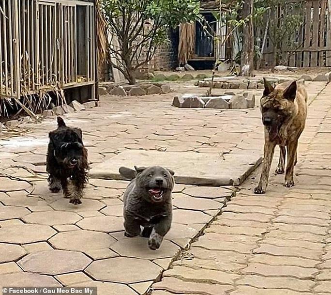 Chó Dúi ở Việt Nam gây bão mạng xã hội quốc tế - Ảnh 4.