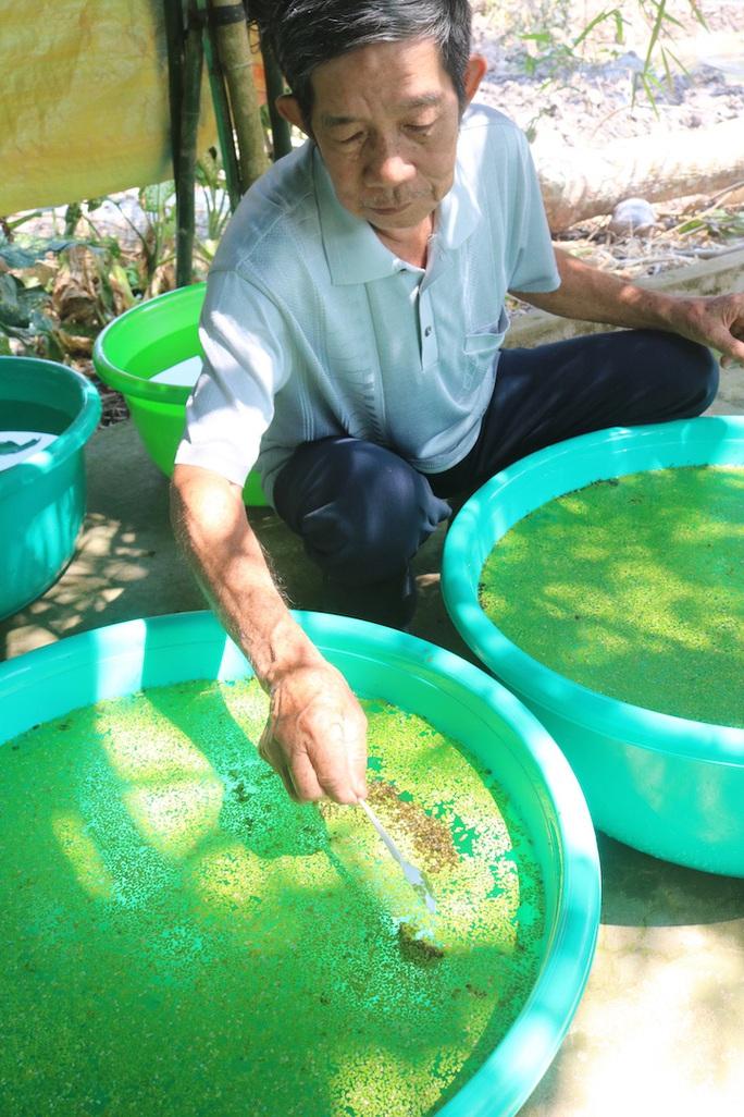 Lão nông 71 tuổi thu nhập 24 triệu đồng/tháng nhờ nuôi ốc bươu đen - Ảnh 5.